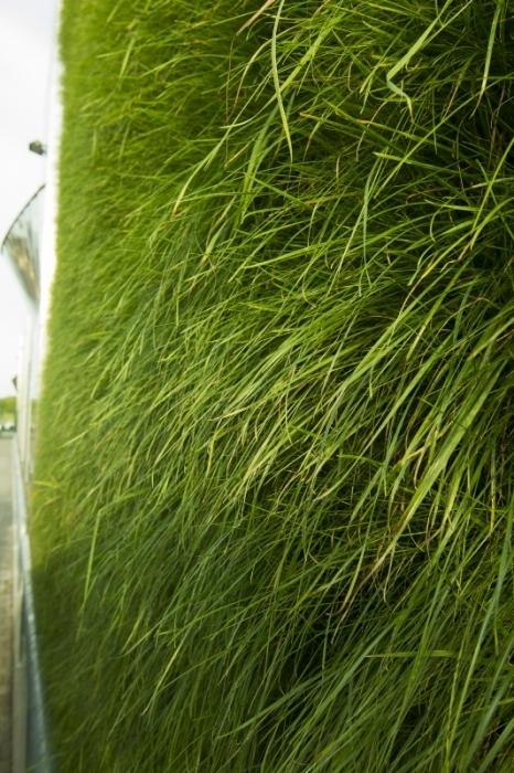zelené fasády