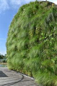 Zelená fasáda